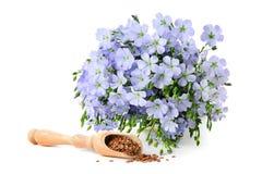 Zadenvlas en bloemen stock fotografie