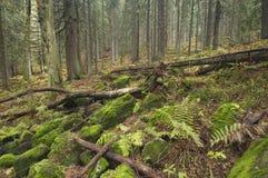 Zadna Polana primeval forest Stock Photo