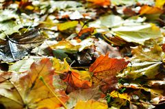 Zadziwiać kolory jesień i czas kolory bogaci i żywi zdjęcia stock