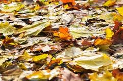 Zadziwiać kolory jesień i czas kolory bogaci i żywi fotografia royalty free
