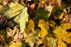 Zadziwiać kolory jesień i czas kolory bogaci i żywi zdjęcie royalty free