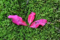 Zadziwiać kolory w naturze obraz stock