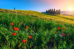Zadziwiać Tuscany krajobraz z cyprysowymi drzewami i kwitnieniem kwitnie, Włochy fotografia stock