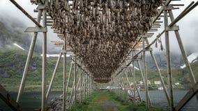 Zadziwiać Lofoten wyspy Obrazy Royalty Free