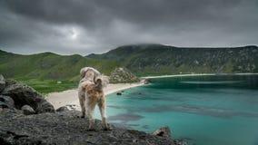 Zadziwiać Lofoten wyspy Zdjęcia Stock