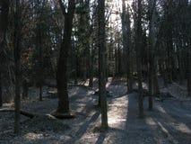 Zadziwiający las strzelający z słońca jaśnieniem obraz royalty free