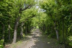 Zadziwiająca ścieżka obramiająca deciduous drzewami, ornamentacyjny ogród, magii miejsca Zdjęcia Royalty Free