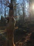 Zadziwiająca drewniana rzeźba w lesie Obrazy Royalty Free