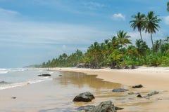 Zadziwiająca zielona natura przy Itacarezinho plażą Zdjęcia Stock