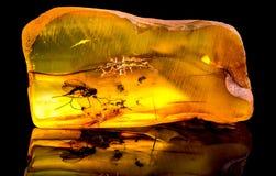 Zadziwiający Baltic bursztyn z zamarzniętym w ten kawałku komar obraz stock
