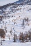 Zadziwiający długa droga krajobraz w śnieżnym pinewood Droga prowadzi do wzgórzy Fotografia Royalty Free
