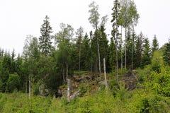 Zadziwiający dziki natura krajobraz Zielony las, duże skały Szwecja europejczycy Piękni natur tła Zdjęcia Stock