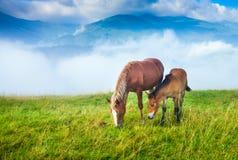 Zadziwiający góra krajobraz z mgłą Zdjęcie Stock
