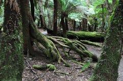 Zadziwiający krajobraz przy Trowutta łukiem, Tasmania w Australia fotografia royalty free
