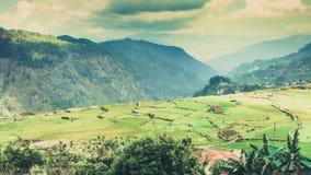 Zadziwiający krajobraz: Rice tarasuje na tło halnej falezie i pięknym kolorowym niebie na zmierzchu Obrazy Royalty Free