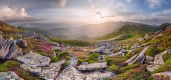 Zadziwiający krajobraz z kwiatami Zdjęcia Royalty Free