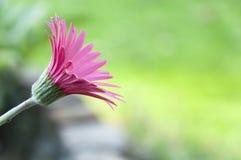 Zadziwiający kwiat z plamy tłem Zdjęcia Stock