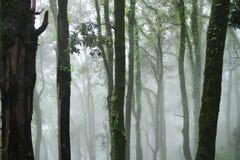 zadziwiający las Zdjęcie Royalty Free