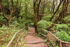 Zadziwiający las tropikalny w losie angeles Gomera Fotografia Royalty Free
