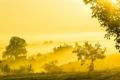 Zadziwiający natura krajobraz z drzewami, winnicami i dom na wsi w ranek mgle, Jesień sceniczny krajobraz Południowy Moravia w cz Zdjęcia Royalty Free