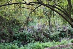 Zadziwiający obrazek dla drzew obrazy stock