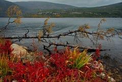 Zadziwiający piękno jesień Daleki Wschód zdjęcia royalty free