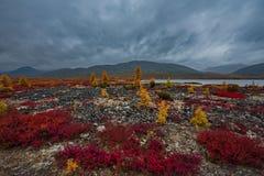 Zadziwiający piękno jesień Daleki Wschód zdjęcie royalty free
