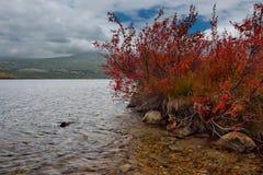 Zadziwiający piękno jesień Daleki Wschód fotografia royalty free