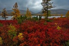 Zadziwiający piękno jesień Daleki Wschód zdjęcie stock