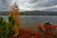 Zadziwiający piękno jesień Daleki Wschód fotografia stock