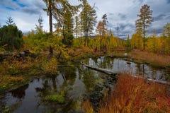 Zadziwiający piękno jesień Daleki Wschód jezioro Maksi obraz royalty free