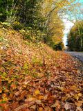 Zadziwiający Pogodny jesień dzień zdjęcia royalty free