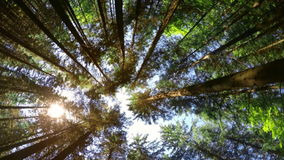 Zadziwiający pogodny ranek przy głębokim górskim wiecznozielonym lasem Karpackie góry zbiory wideo