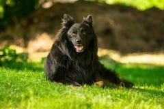 Zadziwiający portret siedzący pies podczas zmierzchu w trawie obrazy royalty free