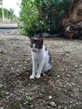 zadziwiający przyglądający kot obrazy stock
