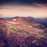 Zadziwiający rocznika krajobraz z kwiatami Obraz Royalty Free