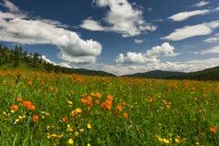 Zadziwiający widoki kwiaciasta łąka Obrazy Royalty Free