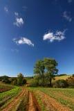 _zadziwiający wieś lato zdjęcie royalty free