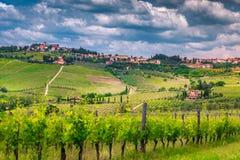Zadziwiający winnica z spektakularnym pejzażem miejskim, Chianti region, Tuscany, Włochy, Europa zdjęcie royalty free
