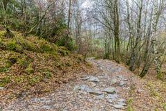 Zadziwiający wizerunek droga gruntowa z dużo i duzi luźni kamienie po środku lasu obraz stock