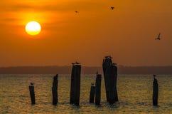 Zadziwiający złoty zmierzch nad oceanem z drewnianymi słupami i latającymi ptakami na Bubaque, Bijagos archipelag, gwinea Bissau Zdjęcia Stock