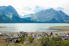 Zadziwiający zielony jezioro otaczający górami Alberta Kanada Zdjęcie Royalty Free