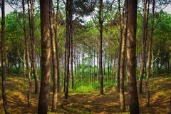Zadziwiający zielony las Zdjęcia Stock