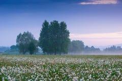 Zadziwiający zmierzch nad polem piękni dzicy daffodils Fotografia Royalty Free