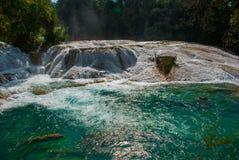 Zadziwiająca Turkusowoniebieska woda siklawy Agua Azul w Chiapas, Palenque, Meksyk Zdjęcie Stock
