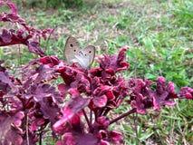 Zadziwiający butterflys zdjęcia royalty free