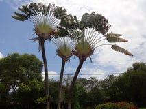 Zadziwiający drzewo Obrazy Stock