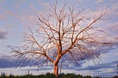 Zadziwiający drzewo Zdjęcie Royalty Free
