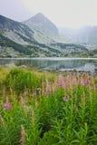 Zadziwiający krajobraz Rybi jezioro Siedem Rila jezior Fotografia Royalty Free