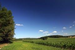 zadziwiający krajobrazowy lato zdjęcia stock